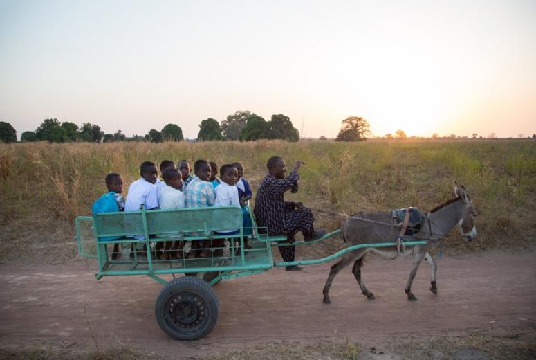 Children from the Sinchou Demben village aboard a donkey cart driving them daily to the closest school offering lower basic classes, around 3km away in Sare Babou. Credit: Aylin Elci