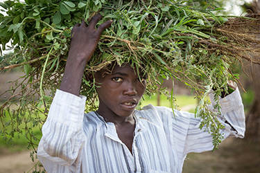 Muhammed Umaru, 15, gathers grass to sell at the IDP settlement in Nigeria. Credit: GPE/Kelley Lynch